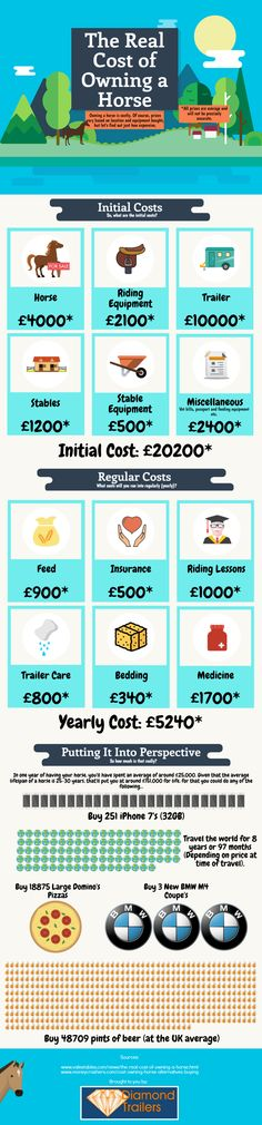 The Cost of Owning a Horse, Care, Maintenance Expenses | Animal Bliss
