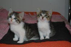 Mascota en adopción en Adoptaloo.com - TEBA y BOCATAS 1 mes de vida BUSCAN FAMILIA JUNTOS.