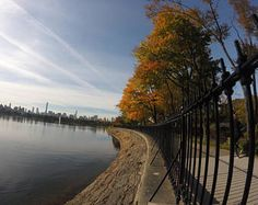 Fall Foliage by the Reservoir in Central Park, New York  fall. autumn. new york city. leaves. reservoir. blue sky.