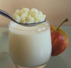 Milk Kefir Probiotic Grains - organic healthy homemade drink
