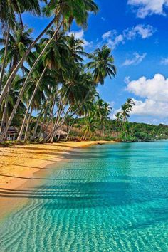 Caribbean beach #beach #summer #ocean #sand #travel #palmtrees #tropical #sky #sea #sun  #sunset