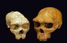 The DNA of an ancient unidentified Siberian has been revealed. The Denisova human shared a common ancestor with modern humans and Neandertha...