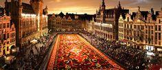 Flowercarpet, Grand Place, Bryssel