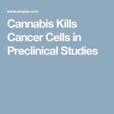 Cannabis Kills Cancer Cells in Preclinical Studies