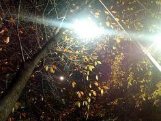 달과 나뭇잎과 가로등