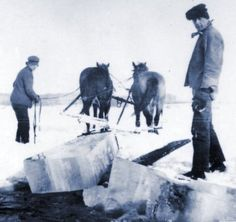 Hauling Ice with Team of Horses