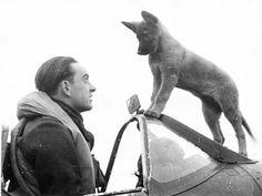 """Piloto de Combate """"Spitfire"""" uno de los escuadrones checoslovacos en la RAF y su perro llamado Sally."""