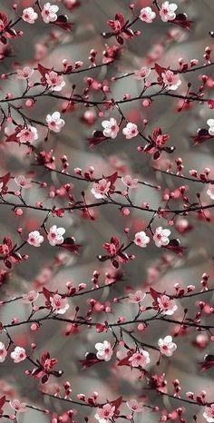 Spring wallpaper iphone quotes life Ideas for 2019 Tumblr Wallpaper, Iphone Wallpaper Herbst, Glitter Wallpaper Iphone, Frühling Wallpaper, Spring Wallpaper, Holiday Wallpaper, Animal Wallpaper, Colorful Wallpaper, Black Wallpaper