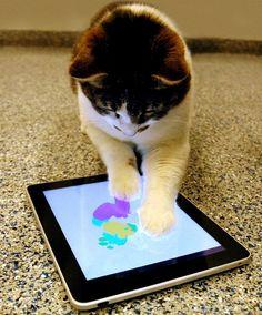 Aplicativo para gatos desenharem (!? o.O ), chama-se Paints for Cats... fofo demais, neah?