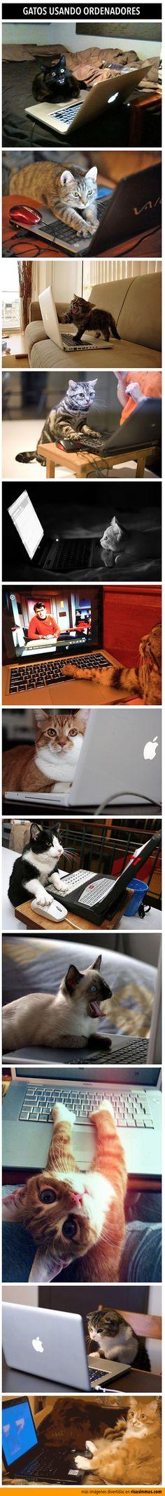 Gatos usando ordenadores