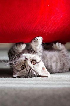 It's FUN Under Here !!! ❤