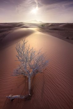 "crossingisland: "" woodendreams: "" Never Give up, Desert, Dubai, UAE, by Abdullaziz BinAli"" on "" Beautiful World, Beautiful Places, Beautiful Pictures, Terra, Amazing Nature, Mother Earth, Wonders Of The World, Oasis, Abu Dhabi"