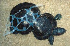 Evil plastic....