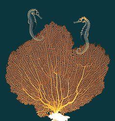 Sea Fan And Seahorses, X-ray Photograph