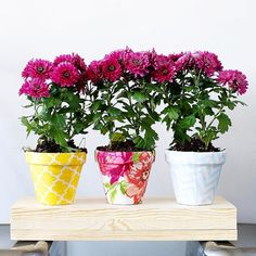 Here's to dreams of spring.... apparently it's supposed to snow tomorrow?!  Happy Weekend! Make it even happier by making yourself these fabric pots ;) #weekendcrafting #craftallthethings