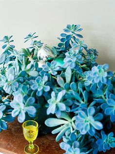 Ghost Plant  With its silvery lavender-blue foliage it's easy to see where ghost plant (Graptopetalum paraguayense) gets its common name. This lovely foliage plant is easy to grow and propagate; simply snip off a leaf or the end of a shoot and pot it in barely moist soil. Ghost plant likes a bright spot and the stems can grow a foot or more long.