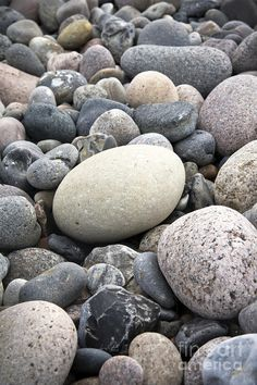 Pebbles; I might think the sky was falling too...for a minute or two