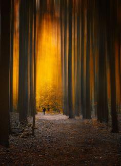 Photograph Walk in Gold Light by Melanie Kern-Favilla on 500px