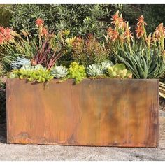 Succulents showing their colors in a rustic corten steel planter box. Tropical Landscaping, Landscaping With Rocks, Modern Landscaping, Backyard Landscaping, Landscaping Ideas, Landscaping Edging, Backyard Ideas, Landscaping Equipment, Gardens
