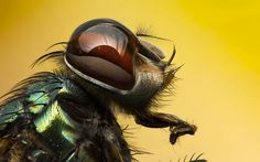 Insects often make us squirm, just the mere thought of getting up close with them could make our skins crawl.  Having said that, getting up close with the right camera gear and a good eye for composition can definitely produce some jaw-dropping shots. We collected 33 astonishing photos of some of the creepiest of crawlers