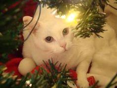 Foto simplesmente perfeita, os protetores de gatos também irão ADORAR e os defensores de animais também! Também pode ser bastante utilizada em véspera de natal e no próprio natal!