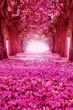 Cheery Blossom Tunnel