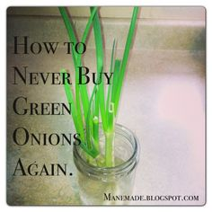 Grow green onions from scrap, takes just 4 days! Why haven't I done this forever???