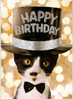 Happy birthday Cat Birthday Wishes, Happy Birthday Greetings, Animal Birthday, Happy Birthday Me, It's Your Birthday, Birthday Cats, Cowboy Hats, Projects To Try, Cute Animals