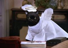 Cute Cats, Funny Cats, Funny Animals, Salem Sabrina, The Witches 1990, Salem Cat, Salem Saberhagen, Cat Memes, Funny Memes