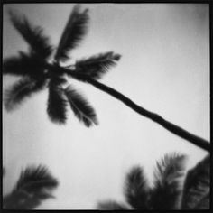 Shop photography at Chairish, the design lover's marketplace for the best vintage and used furniture, decor and art. North Shore Oahu, Surfing, Palms, Black And White, Landscape, Photography, Image, Products, Palmas