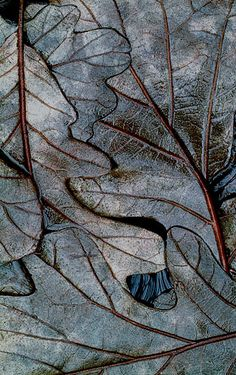 winter swamp leaves micro photo by Mike Moats Patterns In Nature, Textures Patterns, Deco Noel Nature, Photo Macro, Fotografia Macro, All Nature, Natural Forms, Natural Texture, Leaf Texture