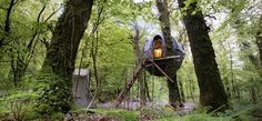 The tree tent with bluebells, Lost Meadow Tree Tent, Cornwall