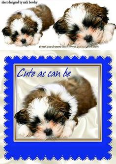 AS CUTE AS CAN BE PUPPY IN A BLUE FRAME on Craftsuprint - Add To Basket!