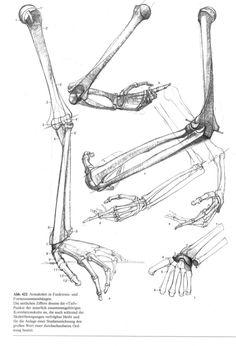 Abh.  428 Der Bizeps in Funktion.  Der Vergleich des unterschiedlichen  a) Beugung des Ellenbogengelenkcs,  die plastische... Arm Anatomy, Human Anatomy Drawing, Human Body Anatomy, Anatomy Study, Body Drawing, Life Drawing, Figure Drawing, Body Reference, Anatomy Reference