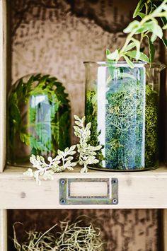 indoor-plants-display-mar16