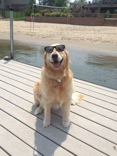 #goldenretrieverbailey #baileynebbia #goldenretriever #dog #puppy