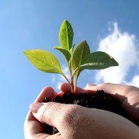 Trois besoins psychologiques à la base de la motivation, du bien-être et de la performance   PsychoMédia