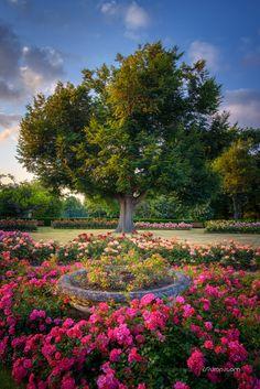 Greenwich Park Rose Garden, London