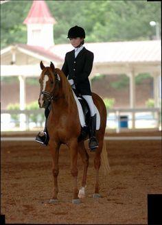 OLF Sequoia, Chestnut Arabian Gelding Types Of Horses, Copper, Shades, Fire, Animals, Animales, Animaux, Animal, Brass