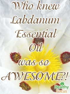 Labdanum Essential oil has many uses. It can help relieve stress, fight cold and cough, and provide relief for rheumatism and menstruation problems.