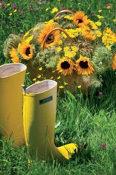 Meer zonnebloemen op www.mooiwatbloemendoen.nl