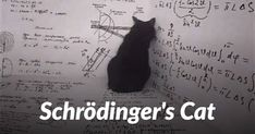 The Schrodinger's cat was a thought experiment, that was devised by Austrian physicist Erwin Schrödinger in 1935 to explain the Copenhagen interpretation of. Science Articles, Science Videos, Science Student, Life Science, Schrodingers Cat, Cats, Condensed Matter Physics, Quantum World, Thought Experiment