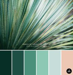 an agave-inspired color palette (Akula Kreative) Green Things green color swatches Green Color Schemes, Green Colour Palette, Bedroom Color Schemes, Bedroom Colors, Green Colors, Tropical Colors, Green Pallete, Ocean Color Palette, Colours