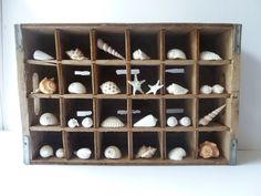 Shell Collection Rustic Home Decor Beach Decor by NyeDesigns, $90.00