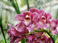 Smart Travels: Mascarin Botanical Conservatory