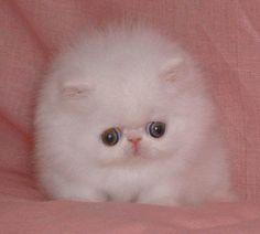 #3 Fuzzy
