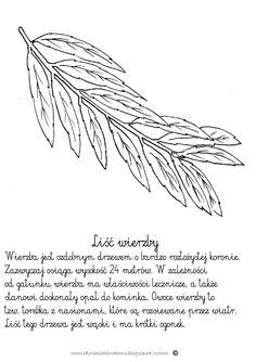 Liść wierzby www.dzieciakiwdomu.blogspot.com