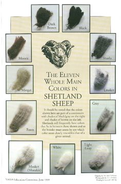 Shetland sheep colors