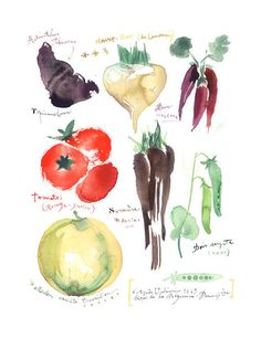 "Heirloom vegetables Archival giclee reproduction print from my watercolor illustration. Printed on fine art "" BFK Rives "" hot-pressed paper, smooth surface, 140 lb, cotton (ac Watercolor Food, Watercolor Print, Watercolor Paintings, Watercolor Illustration, Art Paintings, Menu Illustration, Watercolours, Painting Art, Watercolor Flowers"