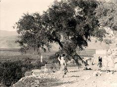 قرية حطين المهجرة - فلسطين 1942م The Village of hattin displaced and destroyed by zionist - Palestine 1942